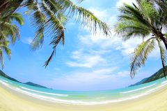 Tropical beach wide angle panorama Royalty Free Stock Image