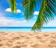 Free Tropical Beach With Coconut Palm Royalty Free Stock Photos - 168025778