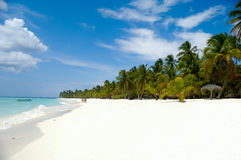 Tropical Beach With Palm And White Sand Royalty Free Stock Photography