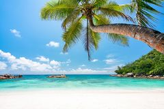 Free Tropical Beach With Palm Tree, White Sand And Turqoise Water Stock Photos - 138752203