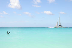 Tropical beach with yacht & pelican, Aruba. Pelican launches from the beautiful caribbean sea, with yacht in the background. Perfect tropical day with turquoise stock photo
