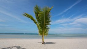 Tropical beach with young palm tree. swaying leaves on a wind. Wild tropical beach summer resort concept stock video footage