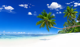 Tropical Beautiful Beach Royalty Free Stock Image
