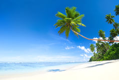 Tropical Beautiful Beach. With Palm Tree Stock Photography