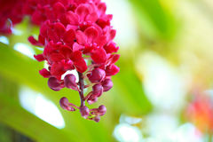 Tropical  beautiful  orchid. In orchid  festival   of Thailand Royalty Free Stock Image