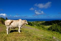 Tropical beef Royalty Free Stock Image