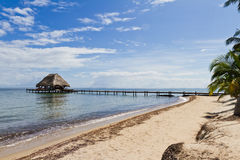 Free Tropical Belize Stock Photography - 36052562