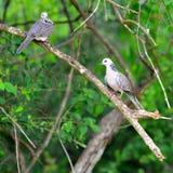 Tropical bird Stock Image