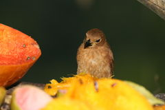 Tropical bird 3 stock photo