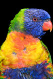 Tropical bird Stock Images