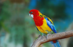 Tropical bird. Stock Photo