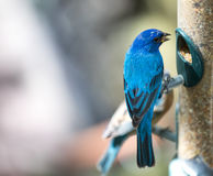 Tropical bird close-up. royalty free stock photography