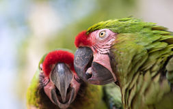 Tropical bird close-up. stock photography