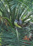Tropical bird Royalty Free Stock Images