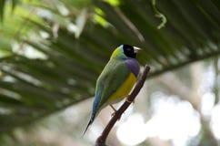 Tropical bird Stock Photo