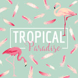 Tropical Bird. Flamingo Background. Summer Design Stock Photos