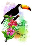 Tropical bird with flowers. Stock Photography