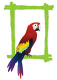 Tropical bird frame Royalty Free Stock Photography