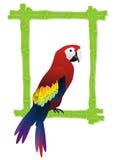 Tropical bird frame Royalty Free Stock Photography