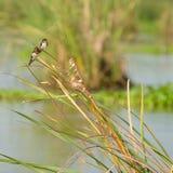 Tropical bird heron Royalty Free Stock Photos