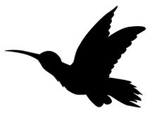 Tropical bird hummingbird Royalty Free Stock Images