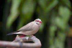 Tropical bird Royalty Free Stock Photography