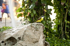 Tropical bird stock photography