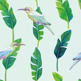 Tropical bird palm leaves green background stock illustration