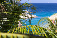 Tropical Bird in Palm tree. With background ocean Stock Photos