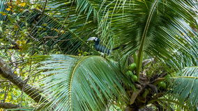 Tropical bird on palm tree. Tropical bird flying away from  palm tree stock video