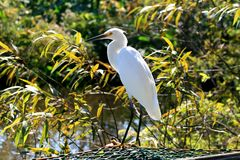 Tropical bird in a park Royalty Free Stock Images
