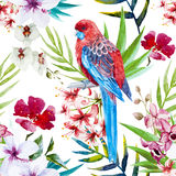 Tropical bird pattern Royalty Free Stock Image