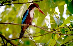 Tropical bird in tree Stock Photo