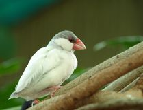 A tropical bird. royalty free stock photo