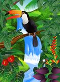 Tropical bird in the tropical forest Royalty Free Stock Photo