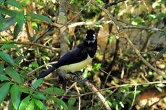 Tropical bird. Royalty Free Stock Photo
