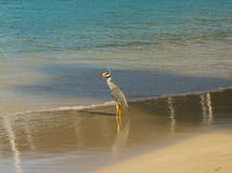 A tropical bird in the windward islands Royalty Free Stock Photos