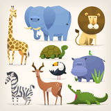 Tropical birds and animals. Set of popular colorful vector tropical animals and birds Royalty Free Stock Image