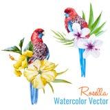 Tropical birds. Beautiful vector illustration with nice tropical birds Stock Photos