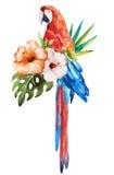 Tropical birds Royalty Free Stock Photos