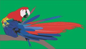 Tropical birds. Colorful parrot pure feathers vector illustration