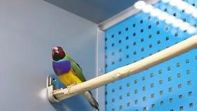 Tropical birds Stock Photography
