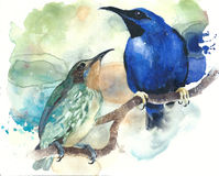 Tropical birds couple sitting on the branch watercolor painting illustration Stock Photo