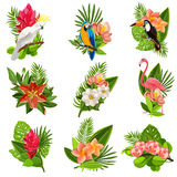 Tropical birds and flowers pictograms set Stock Photo