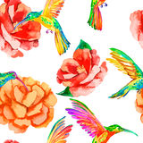 Tropical birds and flowers. Seamless pattern watercolor. Vector. Camellia, hummingbirds. Rosa. Stock Image