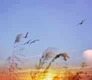 Tropical Sunset And Birds. Tropical Birds Flying At Sunset Stock Photos