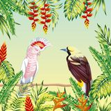 Tropical birds frame leaves and flowers Royalty Free Stock Photos