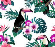 Tropical birds, orchids and palm leaves seamless background. Royalty Free Stock Image