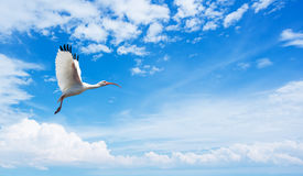 Tropical birds over blue sky background Royalty Free Stock Photos