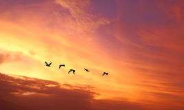 Tropical birds over cloudy sunset background Stock Images